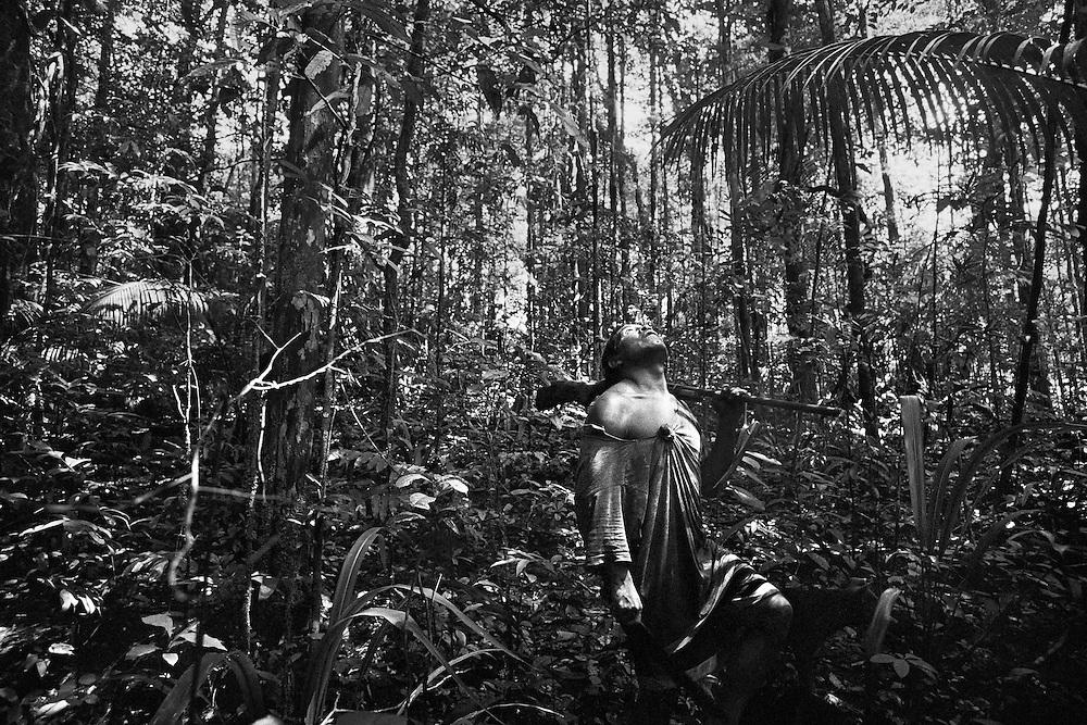Guyane francaise, Haut-Maroni, zone a acces reglemente.<br /> <br /> Chasse.<br /> Dependants des allocations, les Wayanas restent lies a leur environnement naturel et continuent a vivre dans un systeme relativement autarcique : chasse, peche, culture de manioc dans les abattis et &hellip; revenu minimum pour les cartouches et l&rsquo;essence des pirogues.