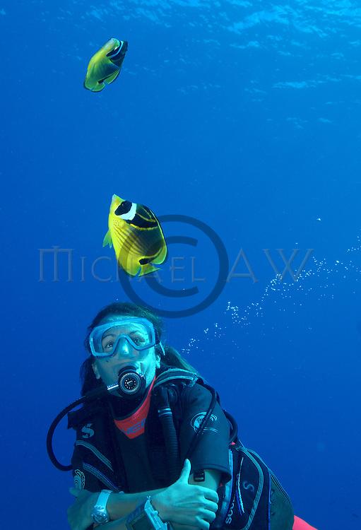 Racoon Butterflyfish Chaetodon lunula with diver, Indo Pacific, Tahiti, Bora Bora