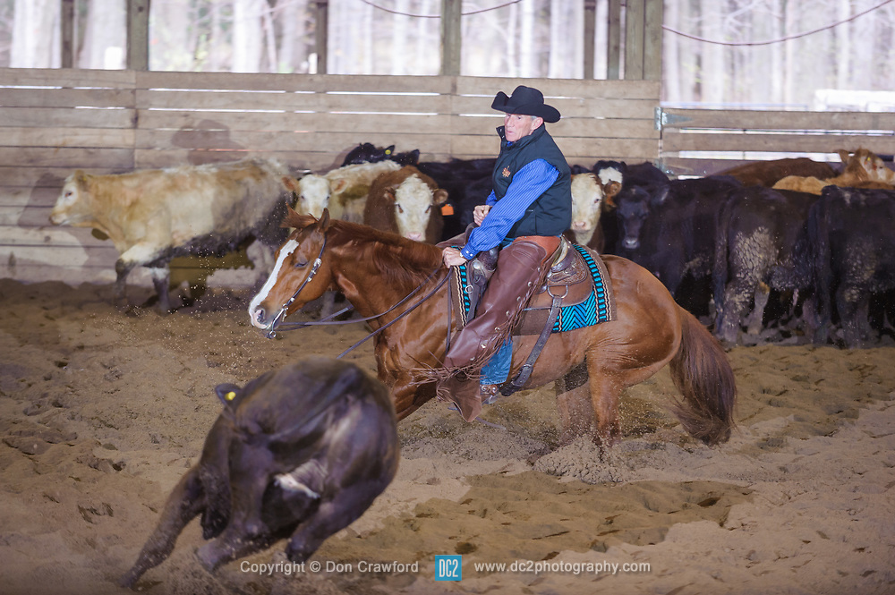 April 30 2017 - Minshall Farm Cutting 2, held at Minshall Farms, Hillsburgh Ontario. The event was put on by the Ontario Cutting Horse Association. Riding in the 2,000 Limited Rider Class is David Hamilotn on Cat Powered owned by the rider.