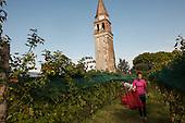Italy - Venezia: Tenuta Venissa