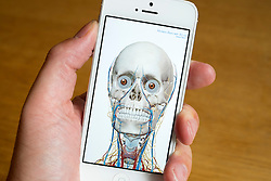 Using medical app to study human anatomy on an iPhone smart phone