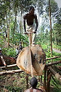 Democratic Republic of Congo, 'Survival in displaced people camps'.<br />