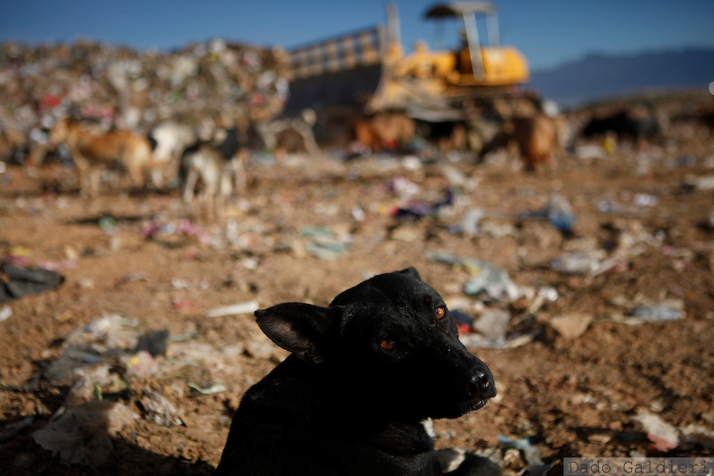 A stray dog rests as a catterpillar moves and compacts garbage at  the Kara Kara garbage dump in the outskirts of Cochabamba, Bolivia, Saturday, April 17, 2010. The main dump in the Cochabamba metropolitan area  receives some 400 tons of non recycled garbage each day and faces a mandatory closure next June due to the proximity to inhabited areas.