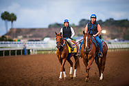 DEL MAR, CA - NOVEMBER 02:  Gun Runner is accompanied by assistant trainer Scott Blasi at Del Mar Thoroughbred Club on November 02, 2017 in Del Mar, California. (Photo by Alex Evers/Eclipse Sportswire/Breeders Cup)