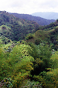 Lush forest vegetation, Blue Mountains, Jamaica