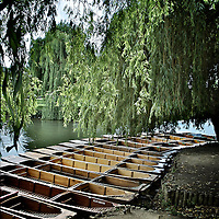 Punts on the river Cam in Cambridge England