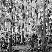 Cypress Grove Spadock Launch - Caddo Lake, Texas - Infrared Black & White