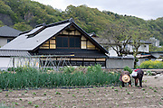 Elderly farmers tend to their fields in Hokuto City, Yamanashi Prefecture on 02  May 2012..Photographer: Robert Gilhooly