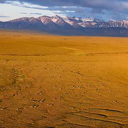 Porqupine Caribou herd in the Arctic Refuge