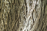 close up of a tree bark