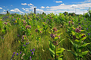 Wildflowers (milkweed, vetch and campion) alongside country road<br />Cheney<br /><br />Canada