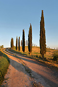 Cypress trees along a winding country lane near Lucignano d'Arbia in Tuscany, Italy. Picture by Manuel Cohen