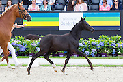 Latina Luwenda<br /> Excellent Dressage Sales<br /> Longines FEI/WBFSH World Breeding Dressage Championships for Young Horses 2016<br /> © DigiShots