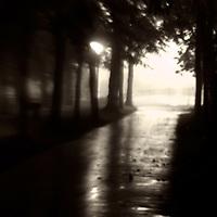 Sun shining through trees onto a dark avenue