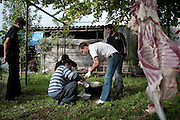 Men butcher a sheep to celebrate the wedding engagement of a local policeman to a school teacher in the village of Duisi. Republic of Georgia