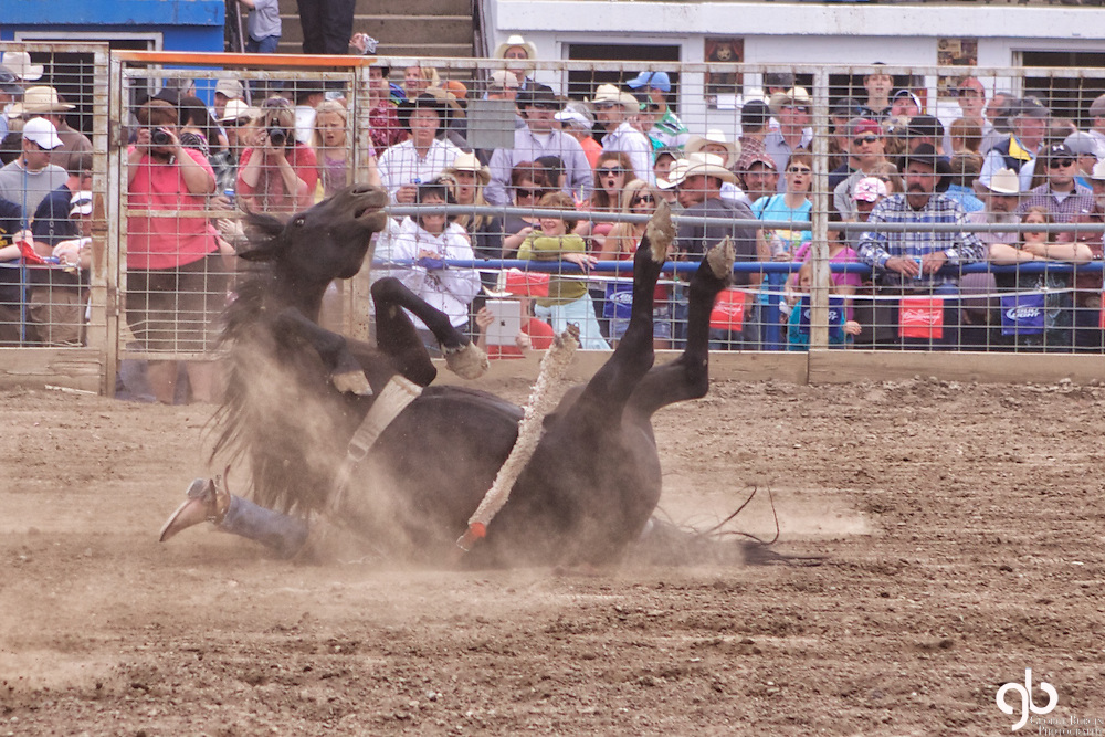 Image captured in Miles City at the world famous Bucking Horse Sale