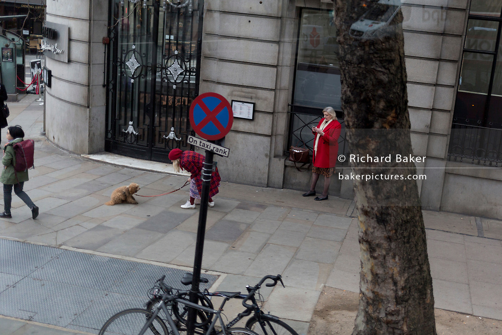 A stubborn pet dog refuses to walk with its owner as they confront each other during a stand-off in Aldwych, on 16th January 2019, in London, England.
