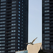 Nederland Rotterdam 11 maart 2009 20090311 Foto: David Rozing ..Woontorens Hoge Heren centrum Rotterdam. Appartments located in the centre of Rotterdam.  ..Foto: David Rozing