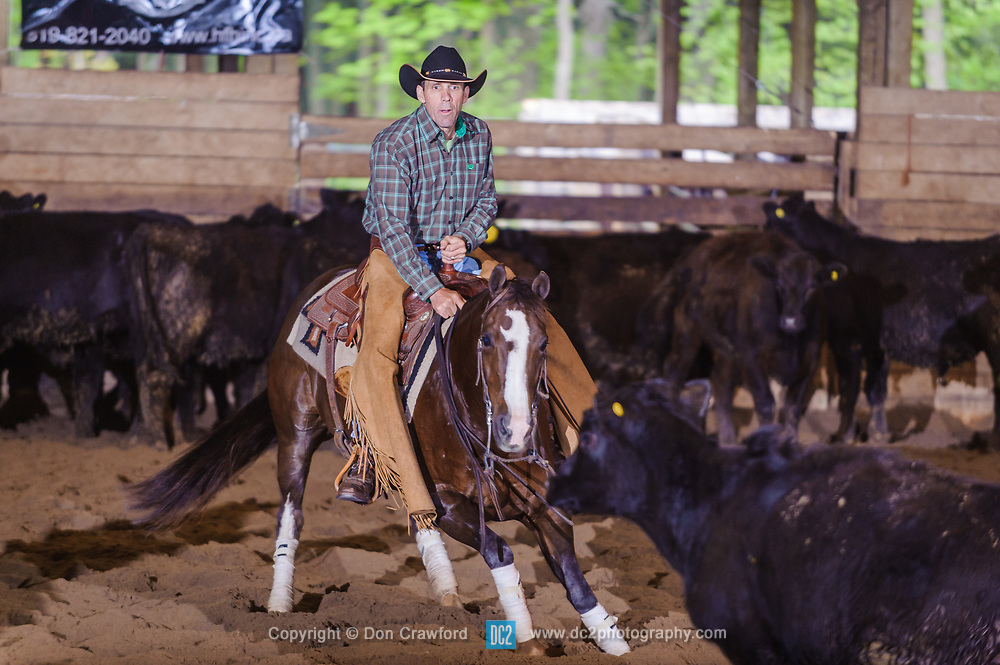May 21, 2017 - Minshall Farm Cutting 4, held at Minshall Farms, Hillsburgh Ontario. The event was put on by the Ontario Cutting Horse Association. Riding in the Non-Pro Class is Ronald Stelzl on Scarlet Catdancer owned by the rider.