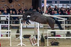 066, Quinn C<br /> Hengstenkeuring BWP - Lier 2019<br /> © Hippo Foto - Dirk Caremans<br /> 18/01/2019