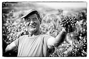 vineyard worker, Bandol France