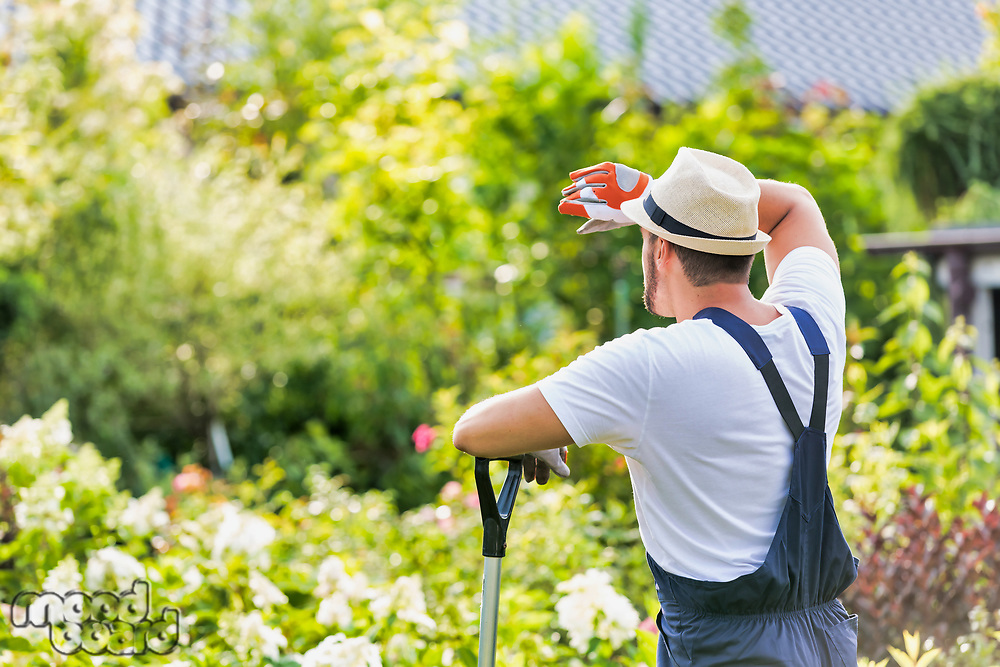 Rear view of tired male gardener leaning on shovel