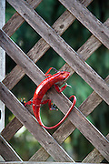 Red artistic replica of a red lizard on thatched wall. St Paul Minnesota MN USA