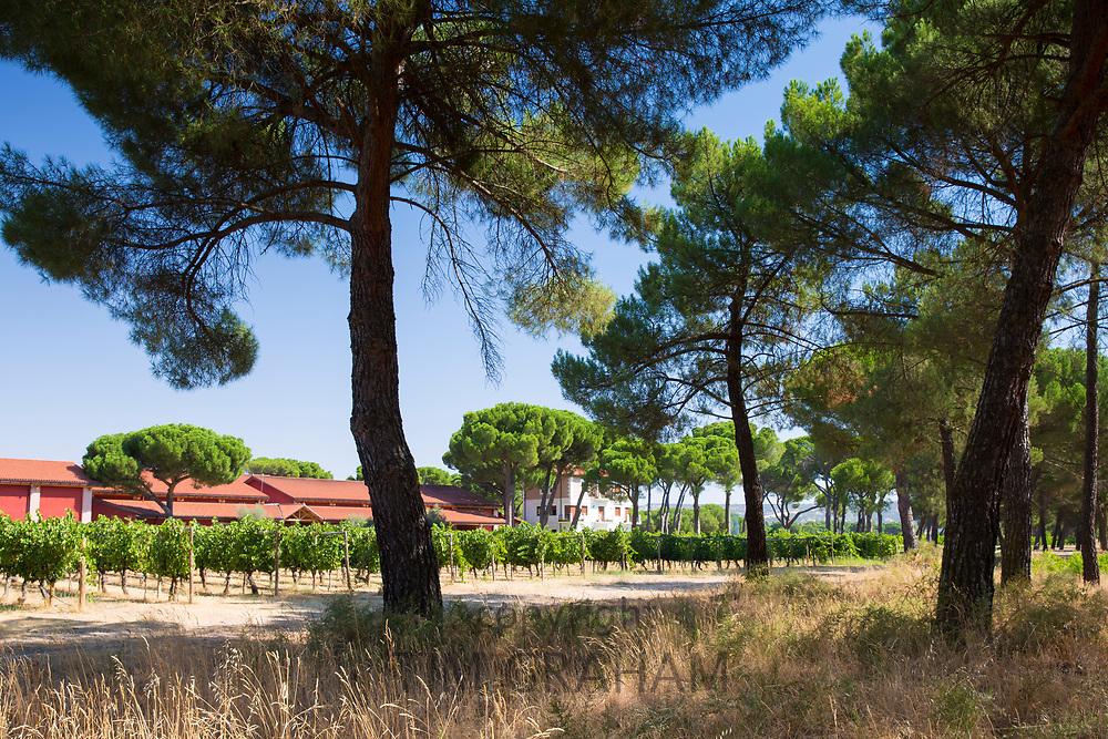 Finca Villacreces, Ribera del Duero wine production bodega by River Duero, Navarro, Spain