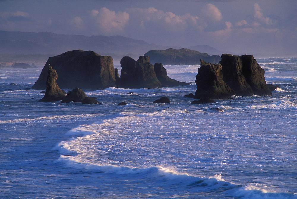 Sea stacks at Bandon Beach from Face Rock State Wayside; Bandon, Oregon coast.