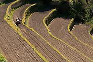 France, Languedoc Roussillon, Cévennes, Gard, culture d'oignons doux des Cévennes, labours sur terrasses avant repiquage, Notre Dame de la Rouvière, Jérôme Fesquet