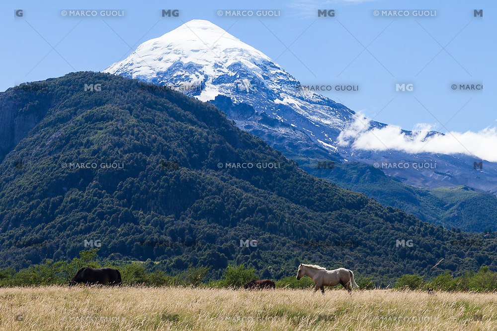 VOLCAN LANIN Y CABALLOS PASTANDO, PARQUE NACIONAL LANIN, PROVINCIA DE NEUQUEN, PATAGONIA, ARGENTINA (PHOTO © MARCO GUOLI - ALL RIGHTS RESERVED)
