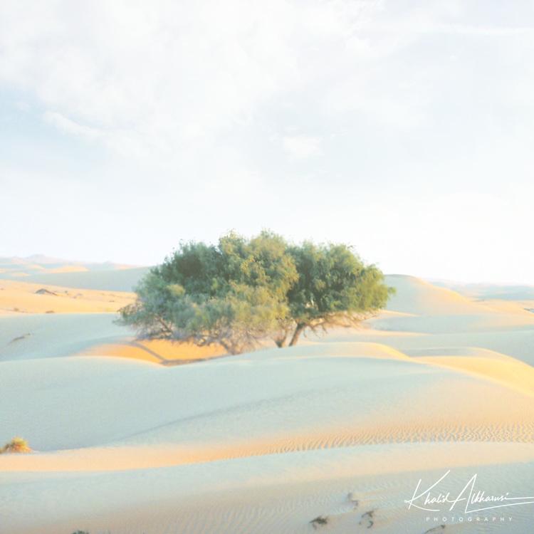 Oman Wahiba Sands Desert
