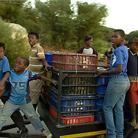 Youth gleefully ride on a trailer bringing broiler chickens for sale in Imizamo Yethu shanty town, Hout Bay, Cape Town, South Africa. The work of the CPF and neighbourhood watch have seen the crime rate in Hout Bay drop 63%, but relations between the shanty town of Imizamo Yethu and Hout Bay are tense.  photo  Leonie Marinovich