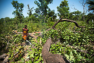A man felling trees for the authorized and controlled production of charcoal in the Kalounayes managed forest. Villagers exploit certain species of trees on designated plots of the forest, re-plant and then rotate to new plots in order to earn a living while protecting their local environment. Initiatives to encourage local inhabitants to protect their natural resources while exploiting them in a sustainable way are crucial to the economic development of the region and to mitigate the effects of climate change on the local way of life. Ouonk, Senegal. 10/11/2014.
