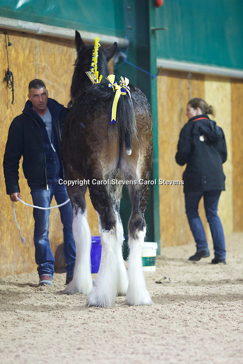 Shire Horse Society Spring Show 2017  Sights and  people around the showground<br /> Torsten Timm
