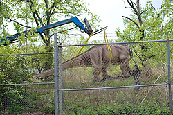 "Apr 25, 2012: Part of a model Apatosaurus dinosaur is unloaded from a trailer and is set in place at Field Station: Dinosaurs in Secaucus, NJ over the next 12 days. The dinosaur theme park is set to open in late May and will be one of the only permanent dinosaur exhibits in the country to use advanced robotics to make the beasts ""move"" in response to visitors. Credit: Rob Bennett for The Wall Street Journal Slug:"