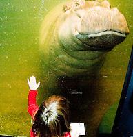 Hippo & School kids The New Jersey State Aqaurium