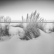 Unusual snowfall on the coast gave for unusual black and white imagery.
