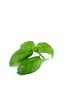 Close-up of fresh basil