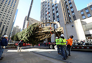 Workers prepare to raise the 75-foot Rockefeller Center Christmas Tree, from State College, PA, Saturday, Nov. 11, 2017, at Rockefeller Plaza in New York.  The 85th Rockefeller Center Christmas Tree Lighting ceremony will take place on Wednesday, Nov. 29. (Diane Bondareff/AP Images for Tishman Speyer)