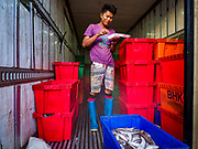23 NOVEMBER 2017 - YANGON, MYANMAR:  A worker standing in the back of a truck, eats his breakfast in the San Pya Fish Market. San Pya Fish Market is one of the largest fish markets in Yangon. It's a 24 hour market, but busiest early in the morning. Most of the fish in the market is wild caught but aquaculture is expanding in Myanmar and more farmed fresh water fish is being sold now than in the past.   PHOTO BY JACK KURTZ