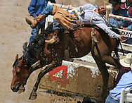 Bareback Rider CASEY COLLETTI earns a 79 point ride on top of 58 POSTAGE DUE BR, Championship Sunday, 29 July 2007, Cheyenne Frontier Days