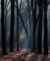 Light hitting several trees in a dark and hazy forest.
