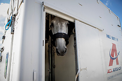 Departure of the horses for Calgary at Liege Airport, Belgium<br /> Harley van den Bisschop, Philippaerts Nicola<br /> Spruce Meadows Masters - Calgary<br /> © Hippo Foto - Dirk Caremans<br /> 01/09/2018