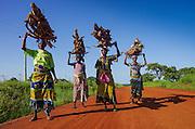 Ghanaian women carry wood to the village of Walewale in Ghana's Upper East region.
