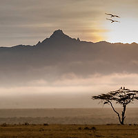 Crowned Cranes at sunrise above Mount Kenya in Laikipia, Kenya
