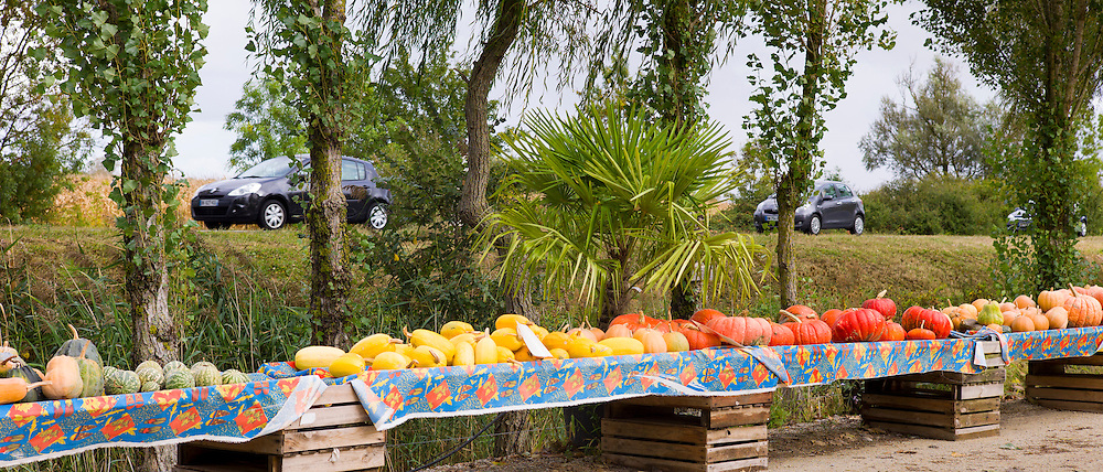 Pumpkin  and squash for sale at roadside stall in Pays de La Loire, France