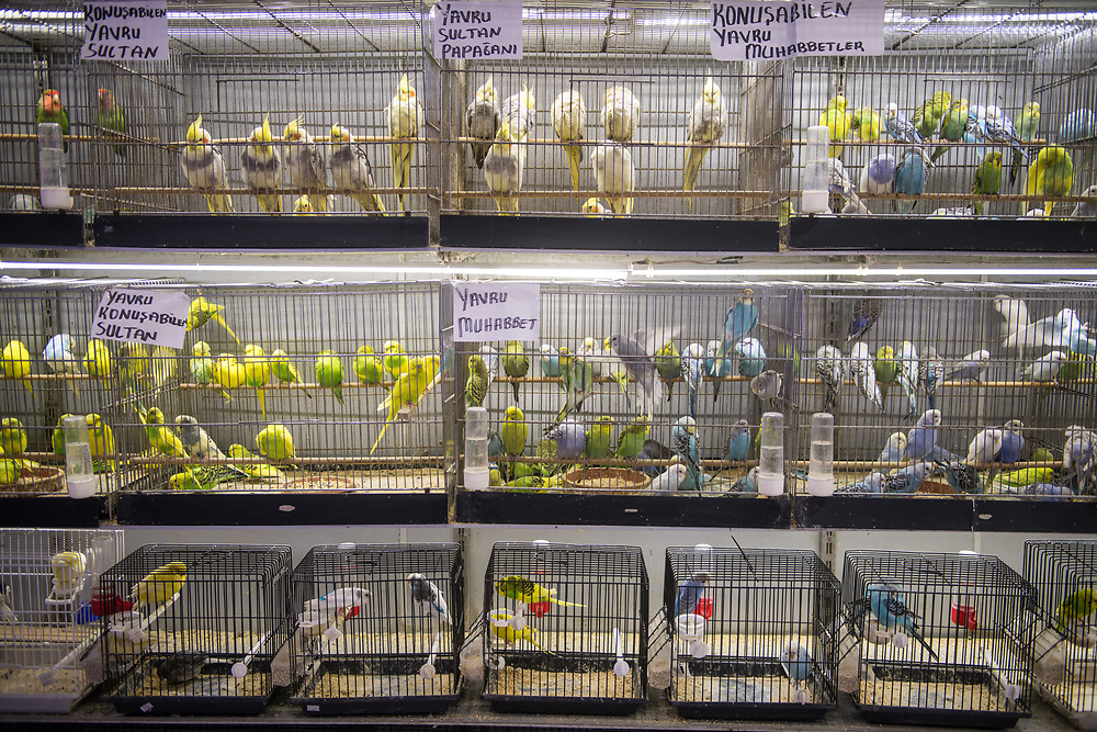 Shelves are lined with bird cages containing different breeds of domestic birds for sale at marketplace, Istanbul, Turkey.