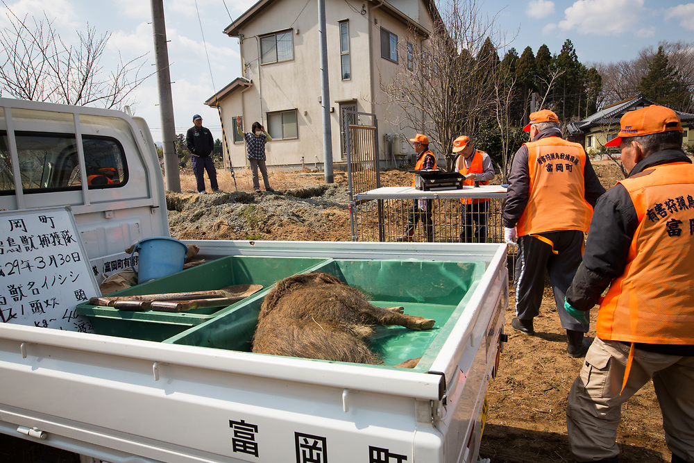 """TOMIOKA TOWN, JAPAN - MARCH 30 : Shoichiro Sakamoto, head of Tomioka Town's animal control hunters group, talks to residents after killing a wild boar at a residential area near Tokyo Electric Power Co's (TEPCO) tsunami-crippled Fukushima Daiichi nuclear power plant in Tomioka town, Fukushima prefecture, Japan, March 30, 2017. According to team leader Shoichiro Sakamoto, """"A wild boar appears in the daytime every day and walking around, residents are scared. It is too dangerous that these might attack people."""" (Photo by Richard Atrero de Guzman/NUR Photo)"""