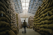 An Ethiopian worker walks through a canyon of 100 kilo bags of export quality green coffee beans stored in the giant warehouse of the Keffa Export Coffee Processing Plant February 21, 2007 in Addis Ababa.  Coffee from farms across the southern coffee growing districts are brought to the center to be sorted and processed for final export by trucks to port in neighboring Djibouti.